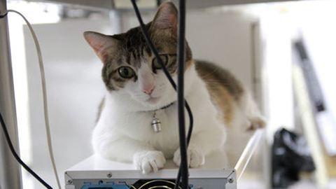 Macskákkal csökkentik a stresszt az irodában