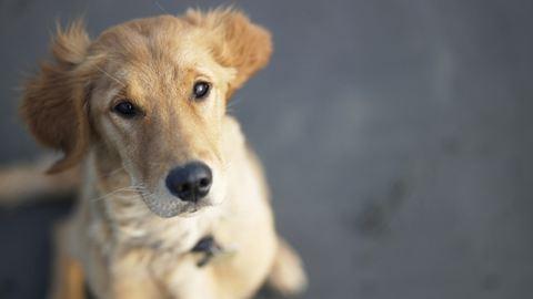Harmincezerre büntethetik azt, aki nem jelenti be a kutyáját