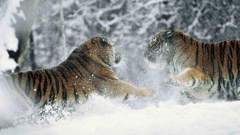 9 lenyűgöző fotó Oroszország havas tájairól