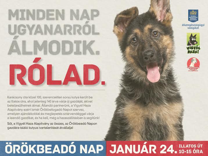 Vigyél haza egy kutyát!