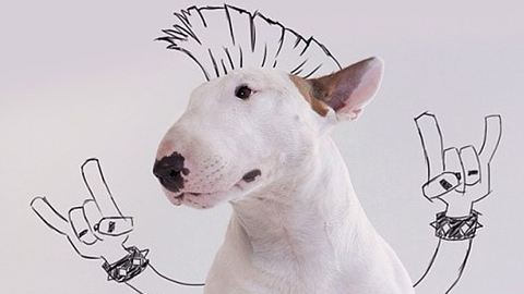Fantasztikus képeket készít kutyájáról egy gazdi