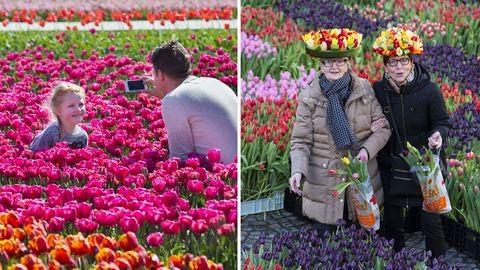 Újra tulipánba borul a világ