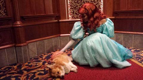 A kutya, akit elvittek Disneylandbe – tüneményes fotók