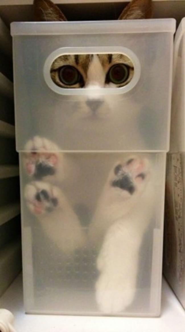 25 macska, akik elképesztő helyekre tudnak elbújni - vicces képekkel