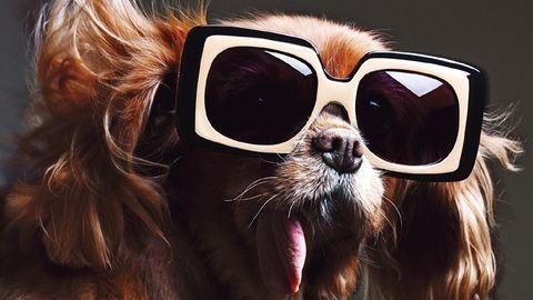 Mentett kutyával reklámoz egy napszemüvegmárka – képek