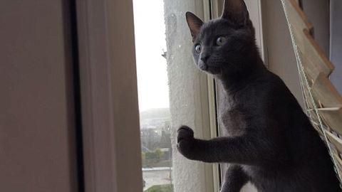 Tündéri videó: először lát havazást a macsek