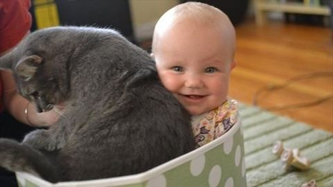 25 bizonyítékunk van, hogy a cicák és a babák együtt a legcukibbak
