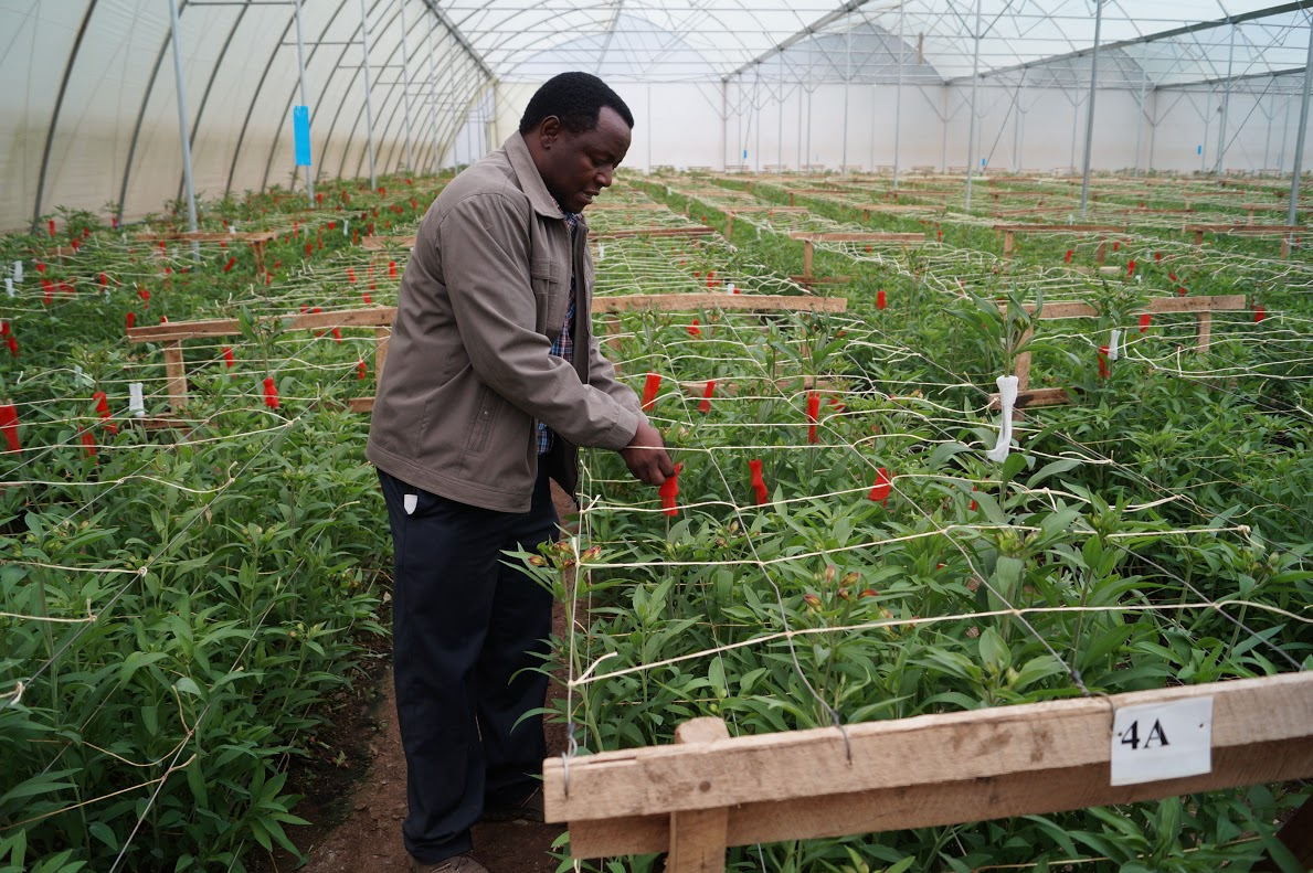 A farm igazgatója, Paul Salim nemcsak a gazdálkodás, de a minőségi virágtermesztés szakembere is