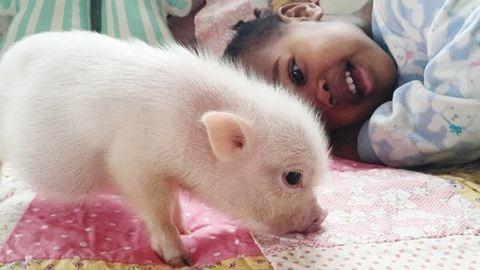 Cuki malac a kétéves kislány legjobb barátja – fotók
