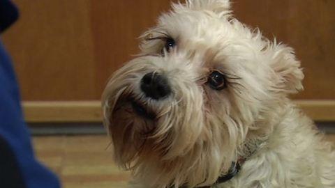 Gazdája után szökött a kórházba a kutya