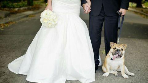 Kutyák az esküvői képeken – imádni való fotók