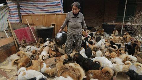 1300 kutyáról gondoskodik 5 idős asszony – fotók