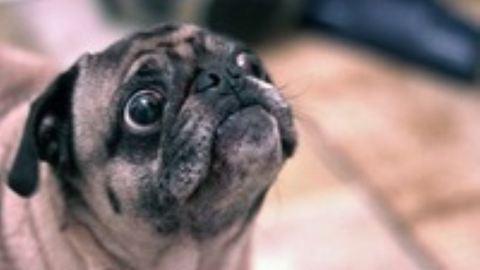 A kutyák is pofára esnek néha – tündéri videó