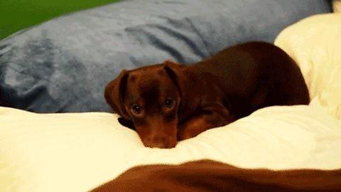 11 kutya, akit beengedtek az ágyba. És te hagyod?