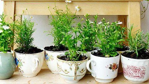 Csináld magad: készíts virágoskertet a bögrédből