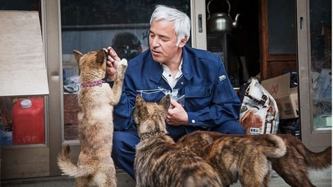 Ő gondozza Fukusima hátrahagyott állatait – megható fotók