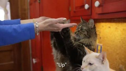Megtanította a jelnyelvet a macskáinak – videó