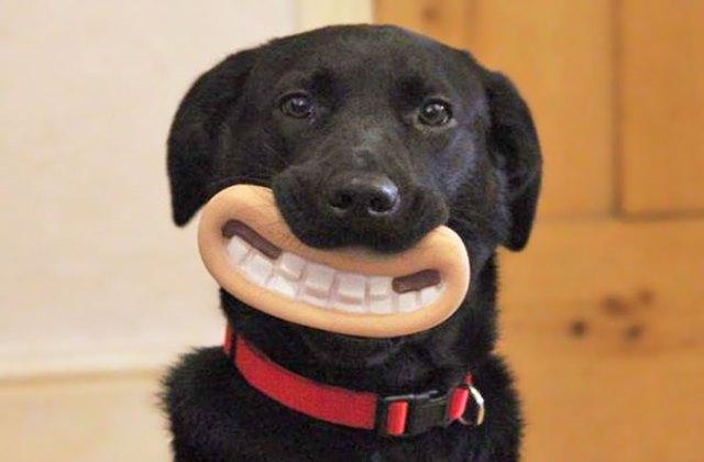 Ezek a kutyák nem tudják, mennyire viccesen néznek ki