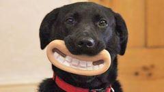 Ezek a kutyák nem tudják, mennyire viccesen néznek ki! – fotók