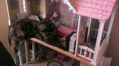 Macskák, akik betörtek a babaházba – vicces fotók