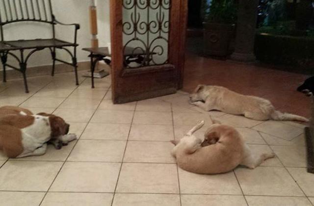 Kóbor kutyák jelentek meg jótevőjük temetésén - megható fotók