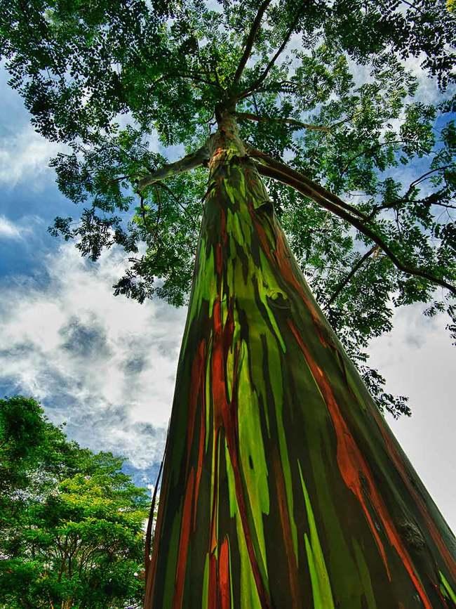 17 csodálatos fa, amely bebizonyítja a természet erejét
