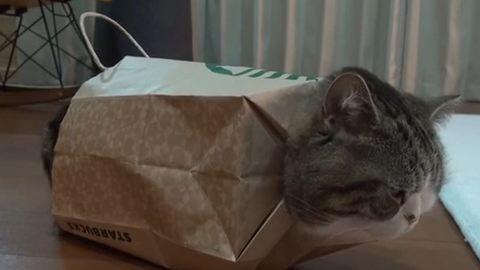 Cuki videó a macskáról, aki papírzacskókban érzi jól magát