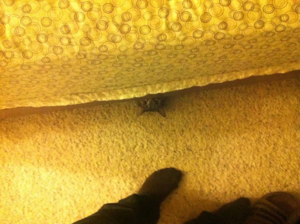 14 macska, aki tuti, hogy valami rosszban sántikál