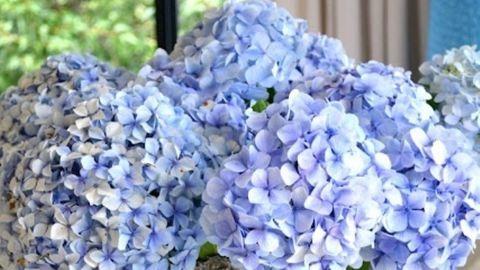3 lila kerti virág: levendula, hortenzia, orgona