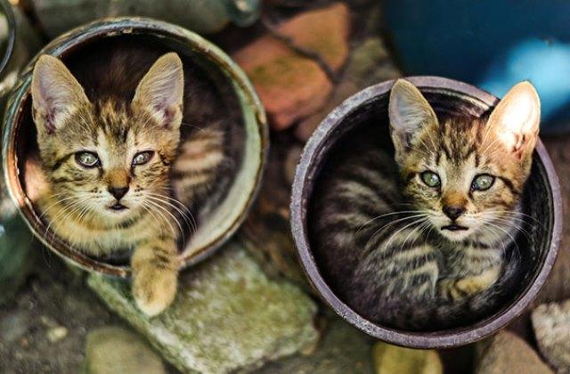 Bájos fotók: virágcserepekben alvó macskák