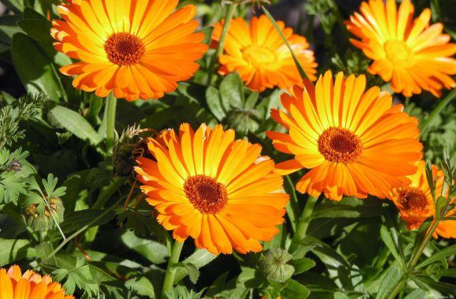 Házi herbárium – gyógynövények termesztése otthon