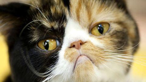 20 macska, akinek biztos, hogy rosszabb napja van, mint neked! – vicces videó