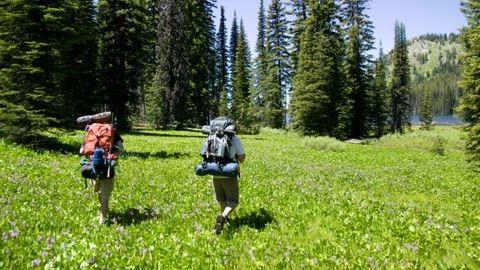 Kis növényhatározó túrázóknak