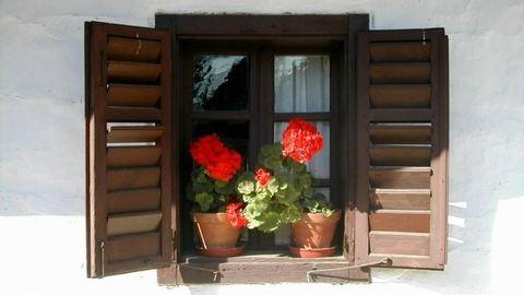 Mutatós növények ablakpárkányra