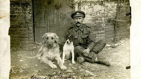 Háborús kutyák: ők voltak az első világháború négylábú hősei