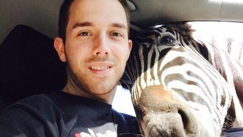 Benézett a zebra az ablakon – tökéletes szelfi lett belőle – fotó