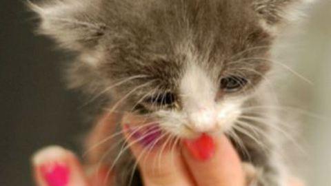Ennél cukibb kiscicák nincsenek is! – fotók