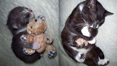 Tündéri fotók: állatok, akik ragaszkodnak a kedvenc játékukhoz