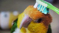 12 állat, amelyik imádja, ha fésülgetik – tüneményes gifek