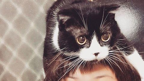 Ezek a macskák kalapnak képzelik magukat – fotók