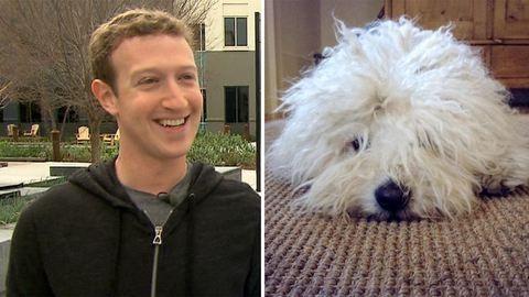 10 hungarikum, amit a szülinapos Mark Zuckerbergnek javaslunk a pulija mellé