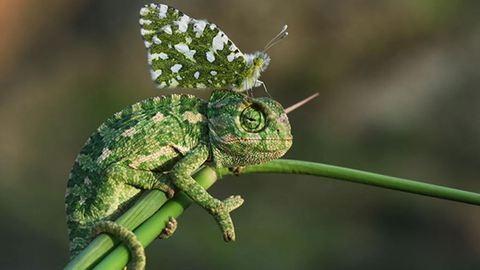 Csodaszép fotók: állatok, akikre pillangók szálltak