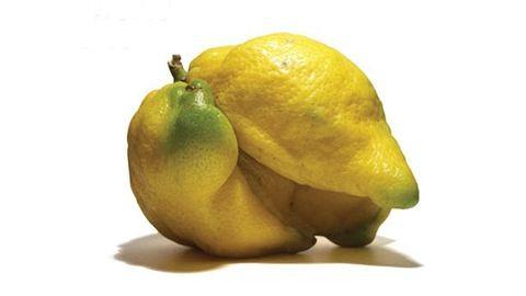 2,7 milliárd kilónyi zöldséget és gyümölcsöt dobnak ki azért, mert csúnya