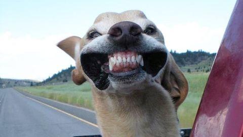 Kutyák, akik imádják a száguldást – vicces fotók