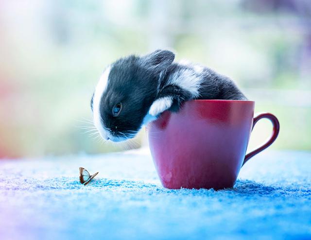 Fokozhatatlan cukiság: így nő fel egy nyúlbaba - fotók