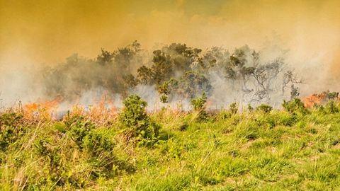 Erdőtűz pusztított a Százholdas Pagonyban