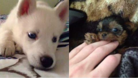 10 kutya, aki elrabolja a szíved – cuki és vicces videók