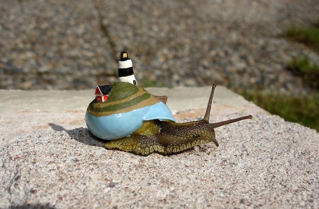 Élő csigák házait festi ki a művész - fotók