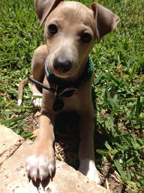 21 kutya, akik nagyon élvezik a nyári szünetet - képek