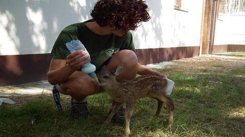 Mentett állatok etetése a Hortobágyi Vadasparkban – megható és cuki fotók